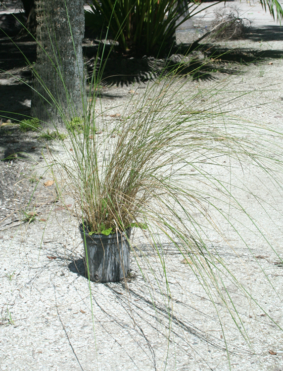 salt and grass growth Factors affecting plant growth we will review these factors because of the limiting effects they have on use of plant nutrients  fescue vs bermuda grass.